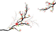 Cherry Blossoms Tree Stock Photo