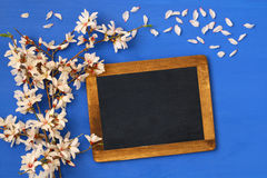 Cherry blossoms tree and blackboard Royalty Free Stock Photography