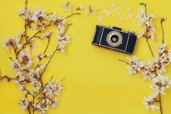 Cherry blossoms tree next to old camera Stock Photos