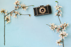 Cherry blossoms tree next to old camera Royalty Free Stock Photo