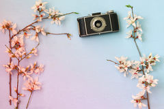 Cherry blossoms tree next to old camera Royalty Free Stock Images