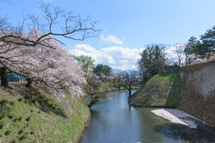 Cherry blossoms trees around Tsuruga Castle Stock Photography