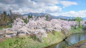 Cherry blossoms trees around Tsuruga Castle Royalty Free Stock Photos