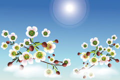 Cherry blossoms under the sun -  card Royalty Free Stock Image
