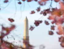 Cherry Blossoms and Washington Monument Stock Photography