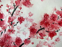 Cherry Blossoms Watercolor 2. Original watercolor painting of Cherry Blossoms Royalty Free Stock Image