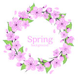 Cherry Blossoms Wreath with Green Leaves Stock Images