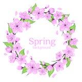 Cherry Blossoms Wreath mit grünen Blättern lizenzfreie abbildung