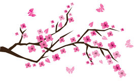 Cherry branch. In blossom with butterflies Stock Photography
