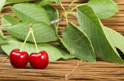 Cherry branch with leaves Royalty Free Stock Images