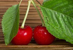 Cherry branch with leaves Royalty Free Stock Image