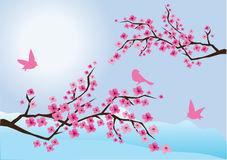 Cherry branches Stock Photos