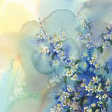 Cherry branches in bloom watercolor background. Cherry branches in bloom watercolor blue background vector illustration