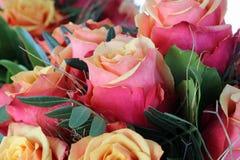 Cherry Brandy Roses Fotografía de archivo libre de regalías