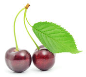 Cherry brunch with leaves Royalty Free Stock Photography
