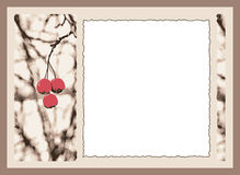 Cherry card Royalty Free Stock Images