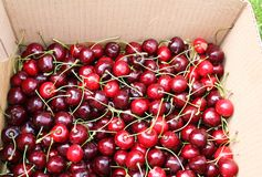 Cherry in cardboard box Stock Photography