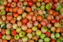 Cherry or cerise fruit grown in tropics royalty free stock images