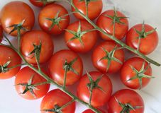 Cherry Cocktail Tomatoes royalty free stock images