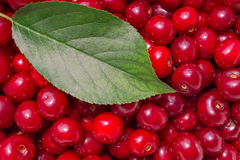 Cherry composition Stock Images