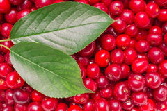 Cherry composition Stock Photo