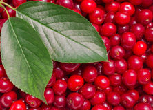 Cherry composition Royalty Free Stock Photo
