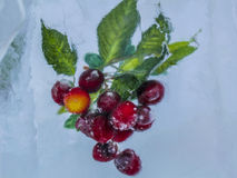 Cherry covered with ice Stock Photography