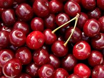 Cherry crop Royalty Free Stock Photo