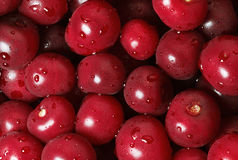 Cherry crop background Royalty Free Stock Image