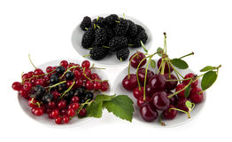 Cherry, currant and mulberry Stock Photos