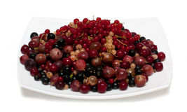 Cherry, currants, gooseberries Stock Image