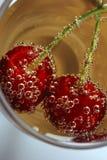 Cherry delight Stock Image
