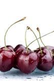 cherry deszcz Zdjęcia Stock