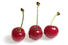 Cherry with dew Royalty Free Stock Photography