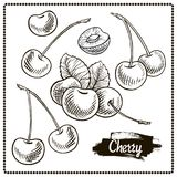 Cherry drawing set. Isolated hand drawn berry on white background. stock illustration