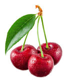 Cherry with drops isolated on white. Clipping path Stock Photography