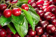Cherry with drops Royalty Free Stock Photos