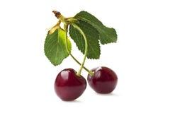 Cherry duo Stock Image