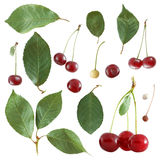 Cherry elements Royalty Free Stock Photo