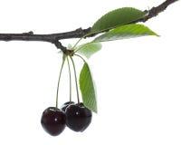 Cherry en för platta white sött Royaltyfri Bild