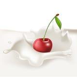 Cherry falling in cream splash Stock Photos