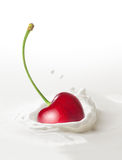 Cherry falling in milk Stock Images