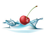 Cherry falling in water splash isolated Royalty Free Stock Photography