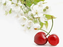 Cherry with flower Royalty Free Stock Image