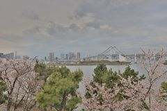 Cherry flower at Daiba at 2016. The cherry flower at Daiba at 2016 Stock Image