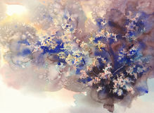 Cherry flower watercolor background. Cherry flower watercolor brown and blue background royalty free illustration