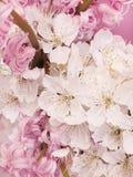 Cherry flowers Royalty Free Stock Photo