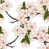 Cherry flowers. Stock Photo