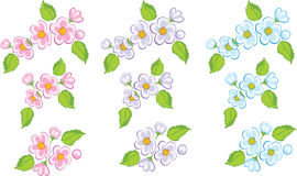 Cherry flowers. Cherry flower in three colors (ai included Stock Photo