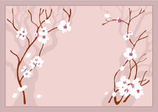 Cherry flowers. Pink background Royalty Free Stock Photos